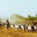 Goat Shepherds, Bagan Myanmar