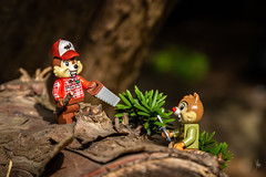Keepers of the forest (Ballou34) Tags: 2019 7dmark2 7dmarkii 7d2 7dii afol ballou34 canon canon7dmarkii canon7dii eos eos7dmarkii eos7d2 eos7dii flickr lego legographer legography minifigures photography stuckinplastic toy toyphotography toys stuck in plastic chip dale disney squirrel forest tree plant nature