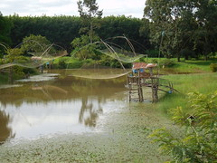 Fish Nets in Bueng Kan (SierraSunrise) Tags: buengkan esarn fishing isaan nets pakkhat thailand สะดุ้ง