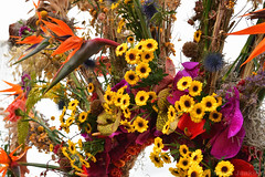 Bird of Paradise Flowers and Sunflowers (Bri_J) Tags: rhs chatsworthflowershow2019 chatsworthhouse edensor derbyshire uk chatsworth flowershow birdofparadiseflower flowers birdofparadise sunflowers strelitzia helianthus