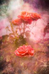 Reach for the sky! (judy dean) Tags: judydean 2019 garden texture ps flowers roses pink