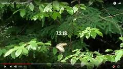 screenSwallowtail [7.2.19] (GrfxDziner) Tags: grfxscreencap grfxdziner dc kerimccarthydrive gwennie2006 dcmemorialfoundation bloggergrfxdziner butterflytales tiger swallowtail apple iphone xr 4april bluewave