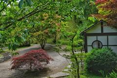 Japanese Garden (5) - Kingston Lacy. (margaretgeatches) Tags: japanesegarden burgundy gold green dappledshade shrubs trees pebbles stones gravel window white black house nationaltrustproperty kingstonlacy wimborneminster dorset