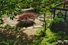 Japanese Garden (4) - Kingston Lacy. (margaretgeatches) Tags: white house black rocks stones pebbles dorset gravel kingstonlacy nationaltrustproperty wimborneminster green burgundy dappledshade trees moss ferns shrubs japanesegarden stonelantern bambooseats