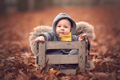 The B Family (nicolewitschass) Tags: babyboy family familyphotography familyphotographer child children toddler boy outdoors naturallight leaves fall autumn cold winter red brown moody nikon d750 70200mm stuttgart germany nicolewfotografie