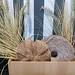 Rundes Sesam-Brot vor Weizenähren, als Landhaus-Dekoration, in einem Holzkorb