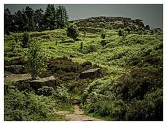 Ilkley Moor DSCN1029 (wayney56) Tags: countryside ilkley moors nature landscape trees green yorkshire britain trail hills rocks