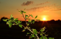 Oberschleißheim - Sunset (cnmark) Tags: sunset abandoned nature leaves germany deutschland sonnenuntergang flash natur disused blitz blätter runway flugplatz airfield verlassen landebahn startbahn ©allrightsreserved aufgegeben schleisheim oberschleisheim ednx