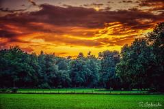 Burning Sky (Stathis Iordanidis) Tags: sunset sundown dramatic sky clouds trees grass grassland farm farmland countryside nature nrw niederrhein germany geldern