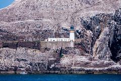 Lighthouse on Bass Rock (Bev & Paul Mynott) Tags: bassrock lighthouse firthofforth scotland northberwick lothian gannets eastlothian