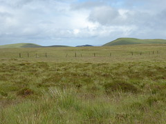 Photo of On Steele's Knowe, 30th June, 2019