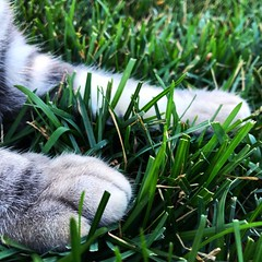 Paws 🐾 (PinkFloyd_) Tags: beautiful photos iphone canon vsco instagramapp instagood photooftheday photography photo grass summer kitten paws paw cat