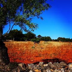 Mallorca (ISO 69) Tags: mallorca majorca spain espana balearen baleares island insel landscape