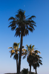 Dubrovnik Palms (Cathherineex) Tags: dubrovnik palmtrees palms summer croatia europe travel beauty blue canon canon60d canonphotography dslrshot dslr canoneos60d 60d traveller
