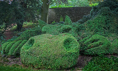 serpentine shrubbery (lowooley.) Tags: cumbria northernengland garden shrubbery topiary dragon