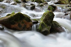 Archipelago Rapids (Robin Shepperson) Tags: green longexposure daylight river stream water rapids stones moss grass leaves aqua forest nature natural d3400 nikon summer outside outdoors parks places nikkor wild capture