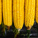 Close up shot of sweet corns