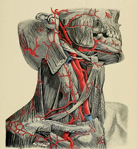 This image is taken from A system of practical surgery, v.2