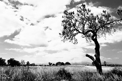 Countryside in Black & White (ISO 69) Tags: black white bw blackwhite countryside style landleben schwarzweiss schwarz weiss fotografie travel reise photography blackbeauty beauty