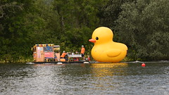 Yellow Duck, Henley Regatta (rq uk) Tags: rquk nikon d750 henleyonthames henleyregatta nikond750 afsnikkor70200mmf28efledvr afsteleconvertertc14eiii