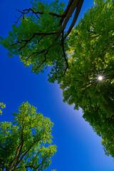 Le soleil a travers les arbres (Glc PHOTOs) Tags: glc1522