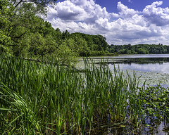 Mill Pond (Chad Straw Images) Tags: massachusetts westborough outdoors nature conservation lake summer green water clouds cloudy blue nikond610 nikon travel photography landscape landscapes pond park photographer westboroughmassachusetts chadstrawimages travelphotography conservationland newengland statepark