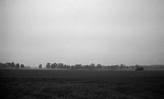 Silent land (Rosenthal Photography) Tags: asa400 kleinbildformat ilfordlc2912920°c9min ff135 analog ilfordhp5 epsonv800 olympustrip35 schwarzweiss frühling ilfordrapidfixer 35mm sommer 20190601 country silentland silent land landscape mood summer mist fog morning fields trees olympus olympus35 trip trip35 dzuiko zuiko 40mm f28 ilford hp5 hp5plus lc29 129 14 rapid fixer epson v800