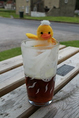 Duckling's adventures  A pint in the sun. (Martellotower) Tags: ducklings adventures pint sun