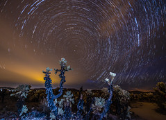 Partial Star Trails at Cholla Cactus Garden (SCSQ4) Tags: astrophotography california cholla chollacactus chollacactusgarden cloudy cloudyskies favorite favoritepicture joshuatreenationalpark landscapes lightpainting night nightphotography overcast photoshoot startrails