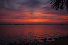 Just before sunrise (mimsjodi) Tags: sunrise sky clouds water indianriverlagoon titusvillefl tree palmtree silhouette