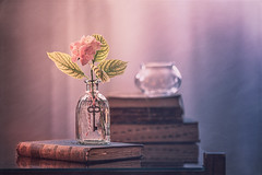 Summer at home (Ro Cafe) Tags: nikkor105mmf28 sonya7iii stilllife hydrangea oldbooks bottle home naturallight textured