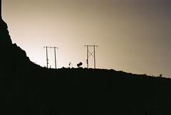 D067677-R1-20-21A (IrvLephunk) Tags: sun sunset nature city plants discoball disco scattered sky orange car mountain mountains huasteca monterrey nuevoleon antena nofilter noprocess raw 35mm film filmphotography bluesky silouhette
