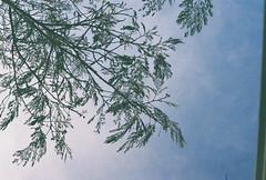 D067677-R1-31-32A (IrvLephunk) Tags: sun sunset nature city plants discoball disco scattered sky orange car mountain mountains huasteca monterrey nuevoleon antena nofilter noprocess raw 35mm film filmphotography bluesky silouhette