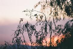 D067677-R1-05-5A (IrvLephunk) Tags: sun sunset nature city plants discoball disco scattered sky orange car mountain mountains huasteca monterrey nuevoleon antena nofilter noprocess raw 35mm film filmphotography bluesky silouhette