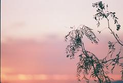D067677-R1-03-3A (IrvLephunk) Tags: sun sunset nature city plants discoball disco scattered sky orange car mountain mountains huasteca monterrey nuevoleon antena nofilter noprocess raw 35mm film filmphotography bluesky silouhette