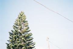 D067686-R1-18-19 (IrvLephunk) Tags: flowers flores cubeta diablin nature monterrey window sky oldcar bridge city road nofilter noprocess dawn kirby wall graffiti pinetree pine pino antena yellowflower cable skyline