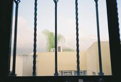 D067686-R1-00-1 (IrvLephunk) Tags: flowers flores cubeta diablin nature monterrey window sky oldcar bridge city road nofilter noprocess dawn kirby wall graffiti pinetree pine pino antena yellowflower cable skyline