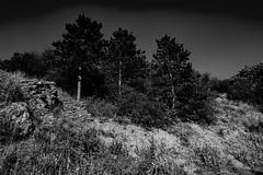 photo (BadSoull) Tags: photo trip prague europe czech nature city trees black white bnw mirrorless sony a6300