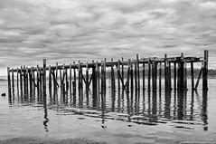 2019-07-03 Abandoned In Anacortes (B&W) (2048x1360) (-jon) Tags: anacortes skagitcounty skagit washingtonstate washington salishsea fidalgoisland sanjuanislands pugetsound pnw pacificnorthwest guemeschannel water sky clouds cloud standardoil dock pier abandoned piling decay derelict ruins bw blackandwhite blackwhite a266122photographyproduction canonpowershotelph180