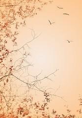 A beautiful summer day / Egy szép nyári nap (Ibolya Mester) Tags: hungary magyar magyarország pannonhalma arborétum sky bird leaves art color colors canon canoneos600d
