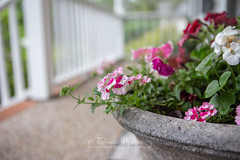 Front Porch Flowers (niseag03) Tags: gallatin tennessee unitedstatesofamerica flowers 2019