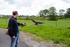 _MG_5944.jpg (Vagari) Tags: russboroughhouse russborough cowicklow me nationalbirdofpreycentre ireland anniversary