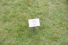 _MG_6005.jpg (Vagari) Tags: russboroughhouse russborough anniversary ireland cowicklow