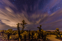 Cholla Cactus Garden on a Cloudy Night (SCSQ4) Tags: astrophotohgraphy california cholla chollacactus chollacactusgarden cloudy cloudyskies favorite favoritepicture joshuatreenationalpark landscapes photoshoot stars
