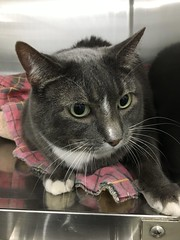 Tuffy - 7 year old neutered male