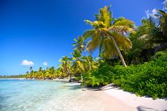 Caribbean beach (1001beach) Tags: beach blue caribbean coast coastline coconut destinations dominican exotic green grove idyllic island landscape nature ocean palm paradise remote sand sea shore summer tranquil travel tree tropic tropical turquoise water dominicanrepublic