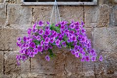 The streets of Lecce (Leaning Ladder) Tags: lecce italy italia puglia apulia flowers purple colors canon 7dmkii leaningladder