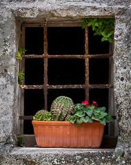The streets of Matera (Leaning Ladder) Tags: matera italy italia basilicata sassi windows flowers canon 7d 7dmkii leaningladder