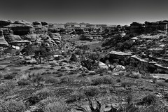 Looking Back Across a Hike Walked (Black & White, Canyonlands National Park) (thor_mark ) Tags: azimuth67 blackwhite blueskies butte canyonwalls canyonlands canyonlandsnationalpark canyons capturenx2edited centralcanyonlands colorefexpro coloradoplateau confluenceoverlooktrail day4 desertlandscape desertmountainlandscape desertplantlife elephantcanyon highdesert hiketoconfluenceoverlook hikingtrail intermountainwest lasalmountains landscape layersofrock lookingne mesa mesas mesasoffindistance mountainpeak mountains mountainsindistance mountainsoffindistance nature naturetrail nikond800e outside portfolio project365 rollinghillsides sandstonecolumn sandstoneknobs sandstonepillar sandstonepillars sandstonerockcolumn silverefexpro2 smallbush smallbushes sunny theneedlesdistrict trail trees utahhighdesert utahnationalparks2017 utah itedstates