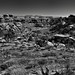 Looking Back Across a Hike Walked (Black & White, Canyonlands National Park)